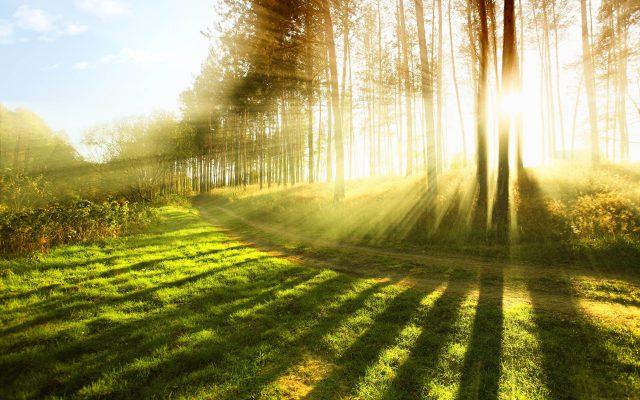 Waldbild Nachhaltigkeit AD2GO