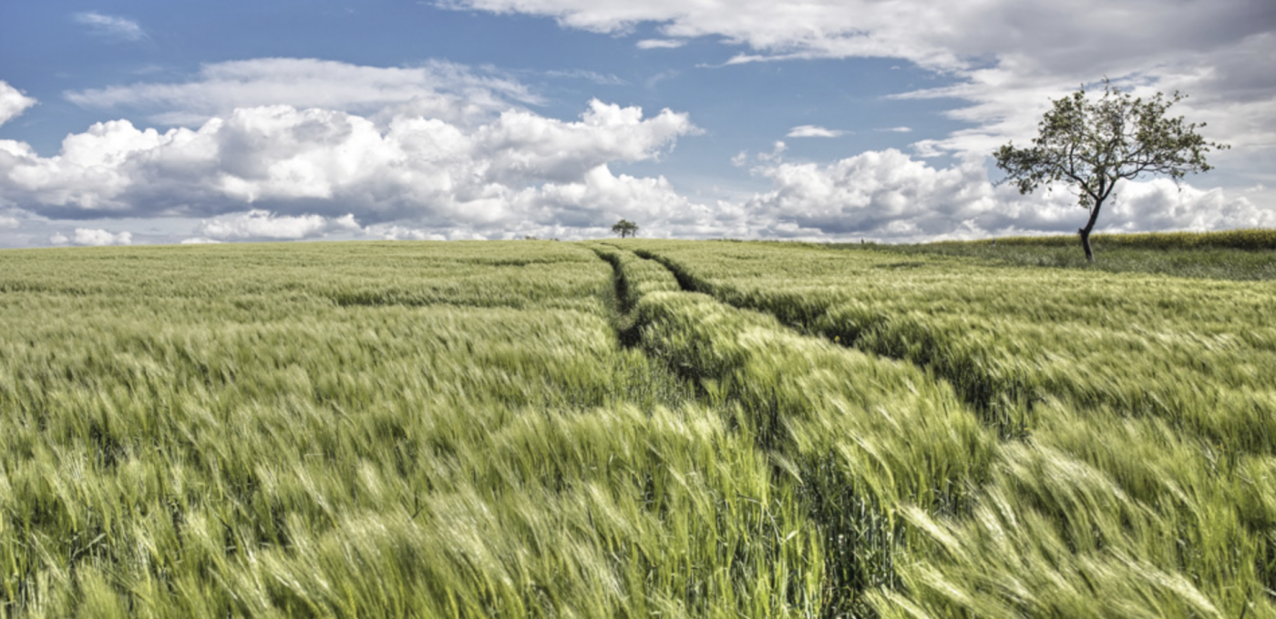 Landschaft Graspapier Becher
